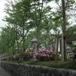 ゴールデンウイークの一日、北鎌倉の新緑と萌える「浪花節だよ洞門は」…