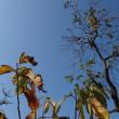 「琴が浜の四季」 干し柿の見える窓辺 しまうま42