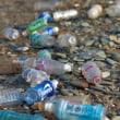 プラスチックごみ、サンゴ成長に悪影響 死滅することも