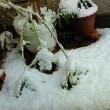 ごくせん・大雪・大混乱。