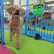 幼稚園体験にきてくれた【ニコちゃん】&【クロエちゃん】(*^-^*)  犬のしつけ教室@アロハドギー