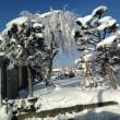 四季2018年(4) 強烈な寒波 大曲の樹々は樹霜で真白に