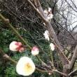 春のきざし~ 梅の花 と 鳥
