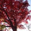 紅葉の秋 2017