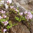 長野県菅平高原(四阿山あずまやさん)を登山の情報