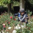 神代植物公園 2017 秋のバラフェスタ 画像集