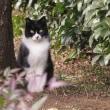 お散歩している公園 猫編