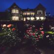 旧古河庭園のバラ ライトアップ・・1