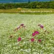 花の都公園で赤富士
