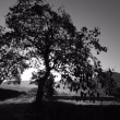 由布の里 津江の柿の木のある風景