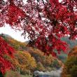 秋の諏訪峡