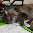 お勉強してても