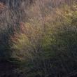「春へと・・・」 いわき 三和 新田のオオヤマザクラ付近にて撮影! 芽生え