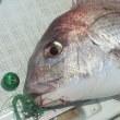 鯛ラバ釣行レポート