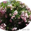 春が来る、花が咲き誇る季節