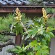 最高気温8℃。寒さ強まり、低い山にも雪。・・・富山市水橋