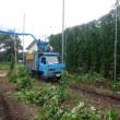 ホップ収穫始まる