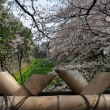 3/26、名古屋城。