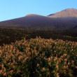 富士山 深夜の「山頂 めざして 」 ~ 1650m台地の初夏彩追い (^_-)-☆