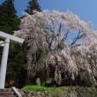水芭蕉(美女高原)Apr.21