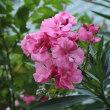7月19日、朝のウォーキングは花を撮りながら~♪