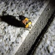 8月5日「八幡平で昆虫探検!」開催しました