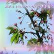 『 残花より散りたくないと声を聴く 』筑紫風575交心zrw0910