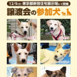 ★ 犬猫譲渡会 in  IKEA ★