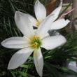 今日のびっくりと今日の花たち!!