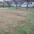 2017年12月10日 赤大根を今回もカーサポートミライさんへ出荷 畑の草刈りもしました。