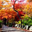 綺麗庭園景色