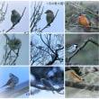 ●以前の雪降る兼六園(YouTubeで )  昨年の瓢池のカワセミなど