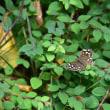 蝶の撮り過ぎ