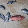 富山県で釣り