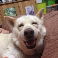 最高の笑顔を残して逝ったシロ