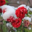 12/13 (水)初積雪