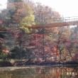 泉自然公園の紅葉 その2