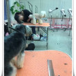 トリミング教室♪