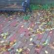 杉並区洪水警報