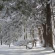 """雪に埋もれる""""香雪園""""..."""
