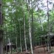第46回 武蔵野ジャンボリー 境南地区