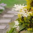 初夏のぶらりお庭散策2