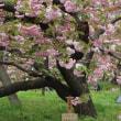 2018年 初夏の花達 そして The Outlets広島 オープン / La Vie en Rose