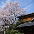 京の桜情報 2018 哲学の道