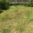 庭の草刈りビフォーアフター