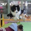 わんこも人も一緒に健康管理しようね!  犬のしつけ教室@アロハドギー