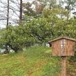 紀州藩主・浅野氏が献上 天然記念物「家康手植のミカン」