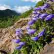 高山の季節!八ヶ岳