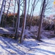 11月21日 うっすら雪景色