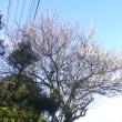 春は名のみの風の寒さ